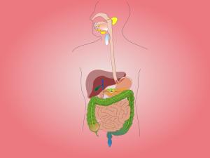 Cinq règles à suivre pour soigner son estomac